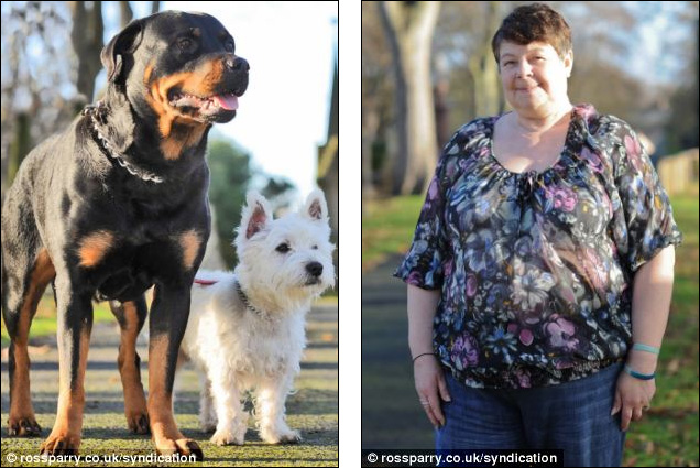 a-timy-West-Highland-Terrier-and-A-Female-Rottweiler
