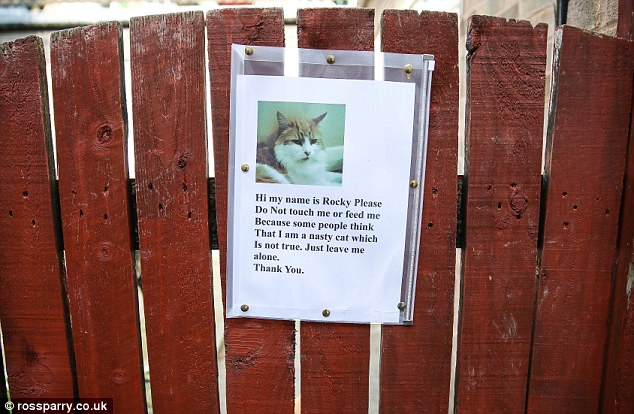 Rocky the cat being called anti-social for biting and damaging property(animal 'ASBO')