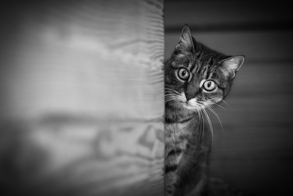 Stunning cat photographs by Evaneo Aware Mimi