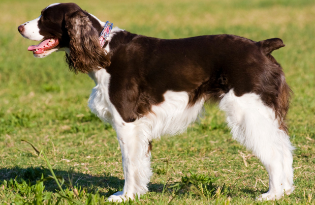 Here Come The Dogs! Part 8: The Kindest Dog Breeds! They ...
