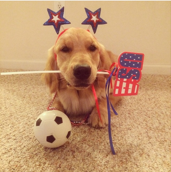 lovely pups, cute dogs, patriotic