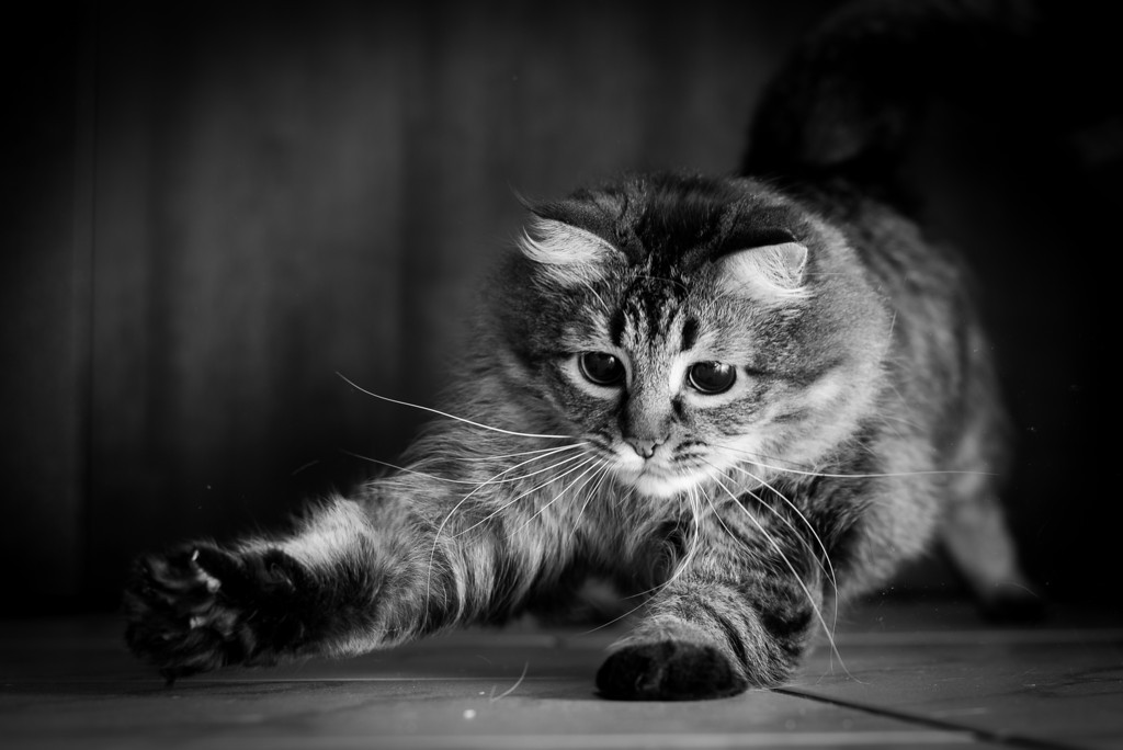 Stunning cat photographs by Evaneo Gaming Time Sanka