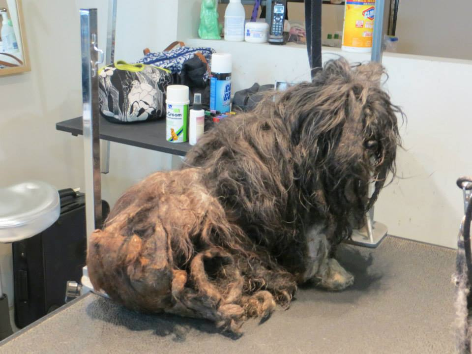 Dog Saved from under 2 Pounds of its own Filth. OMG. This totally restores my faith in humanity.