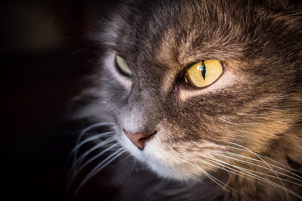 Stunning cat photographs by Evaneo The Guardian Watches Mao
