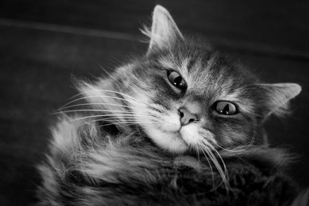 Stunning cat photographs by Evaneo Weasel Face