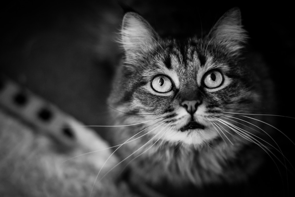 Stunning cat photographs by Evaneo What's Up There Sanka