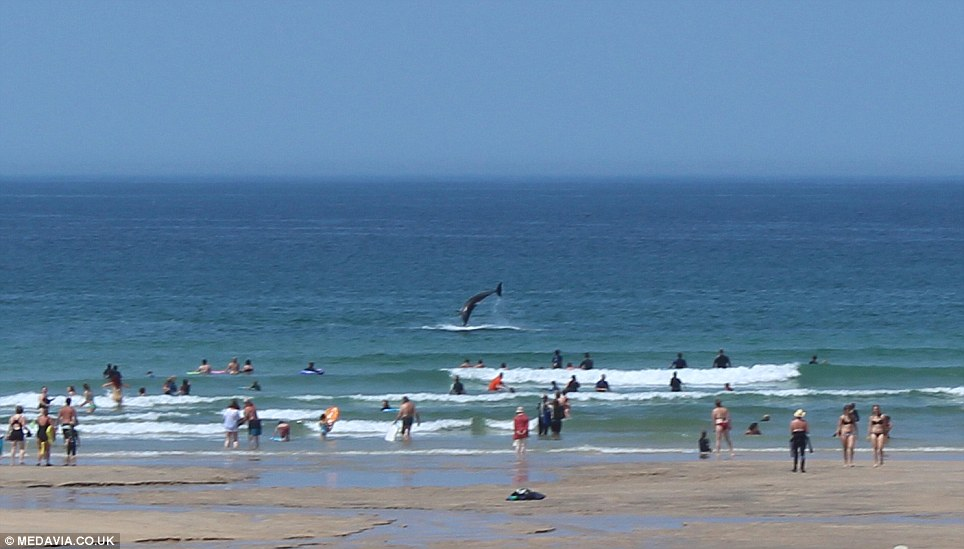 adorable dolphins put on a free show for holidaymakers yards away from a Cornish beach