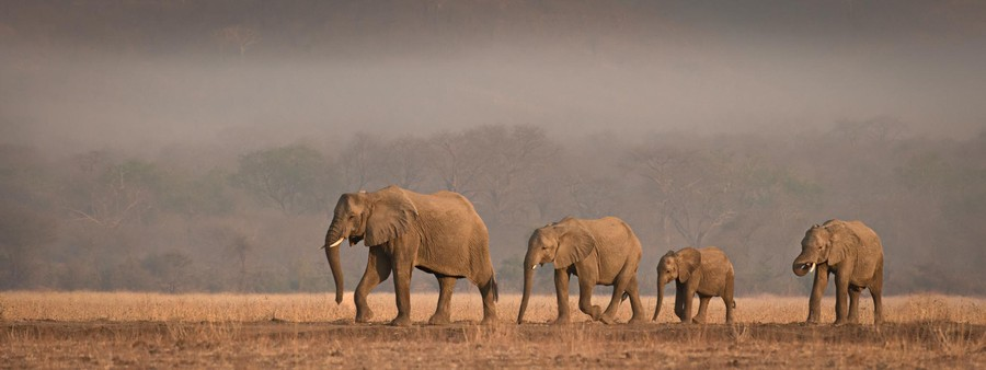 Photograph A Family Outing by Peter O'Hara on 500px