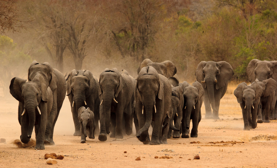 Photograph The Herd - Competition 4 of 5 by Marcus Tejessy on 500px