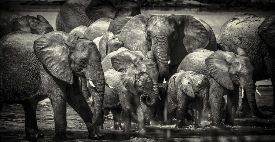 Photograph Family River Crossing by Chris Fischer on 500px