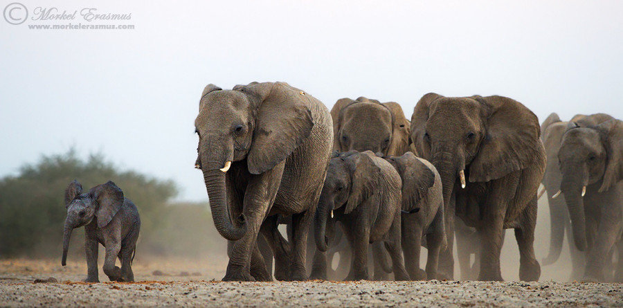 Photograph Leader of the Pack by Morkel Erasmus on 500px