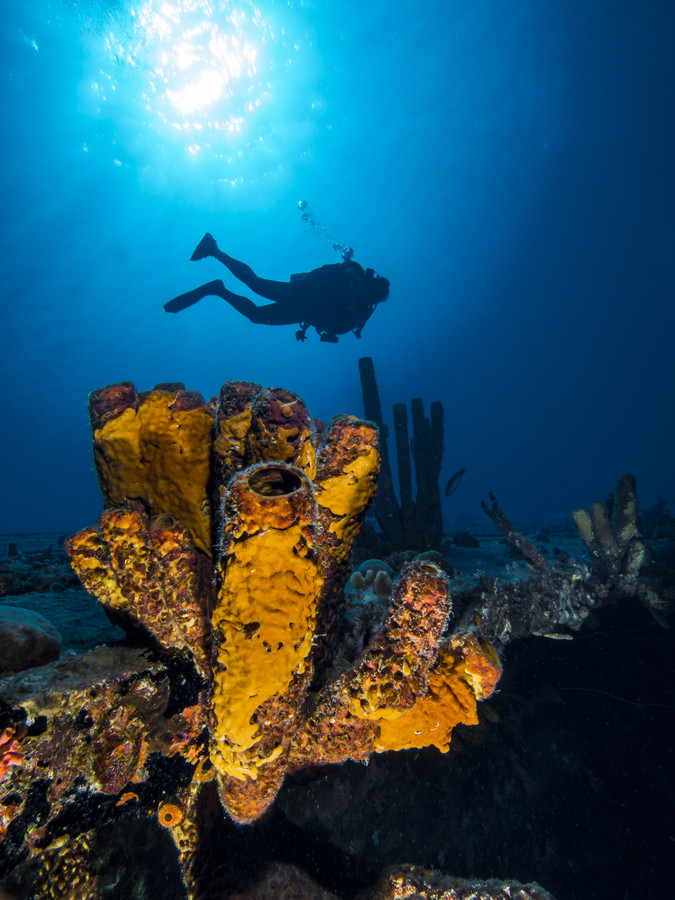 Photograph Diver on the Hilma Hooker Wreck by DivingMeCrazy on 500px