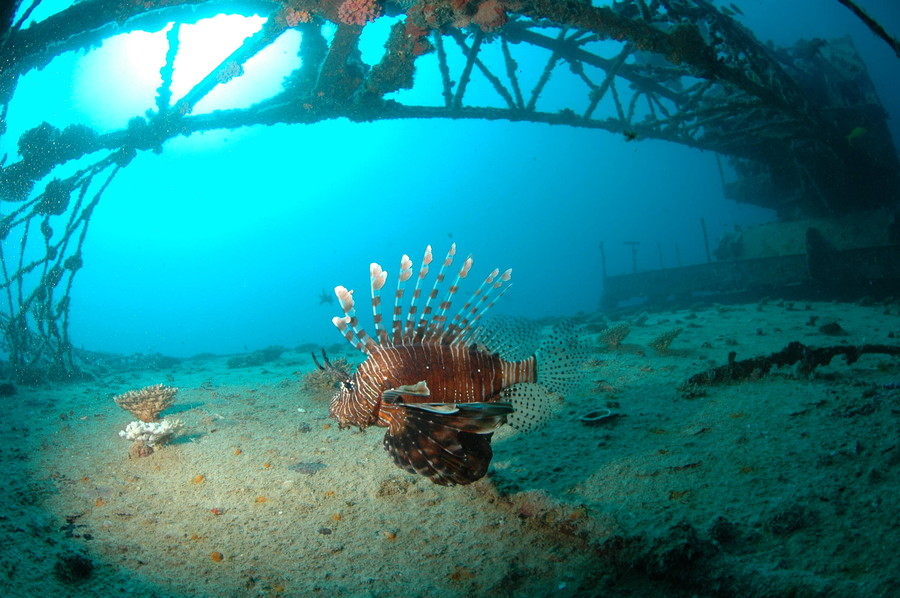 Photograph Lion-fish in the wreck by Julio Sanjuan on 500px