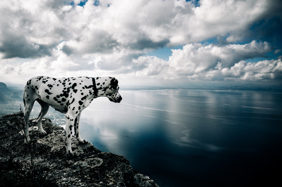 Photograph King Of The World by Martin Warn on 500px