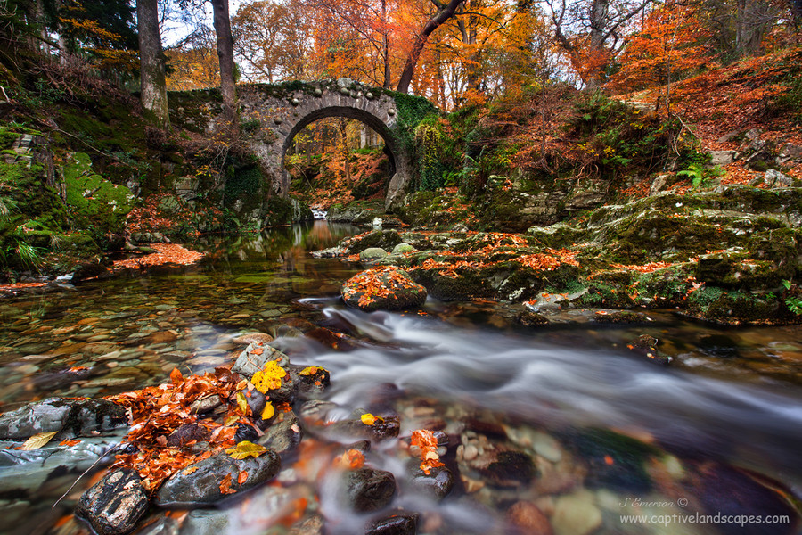 Photograph Tollymore Evening by Stephen Emerson on 500px