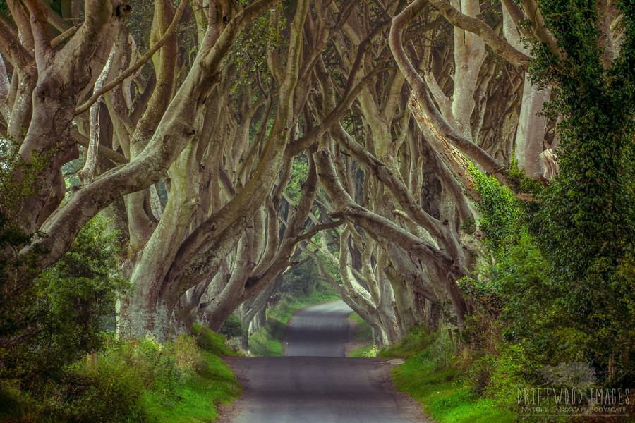 Photograph The Dark Hedges | Northern Ireland by James Pion on 500px