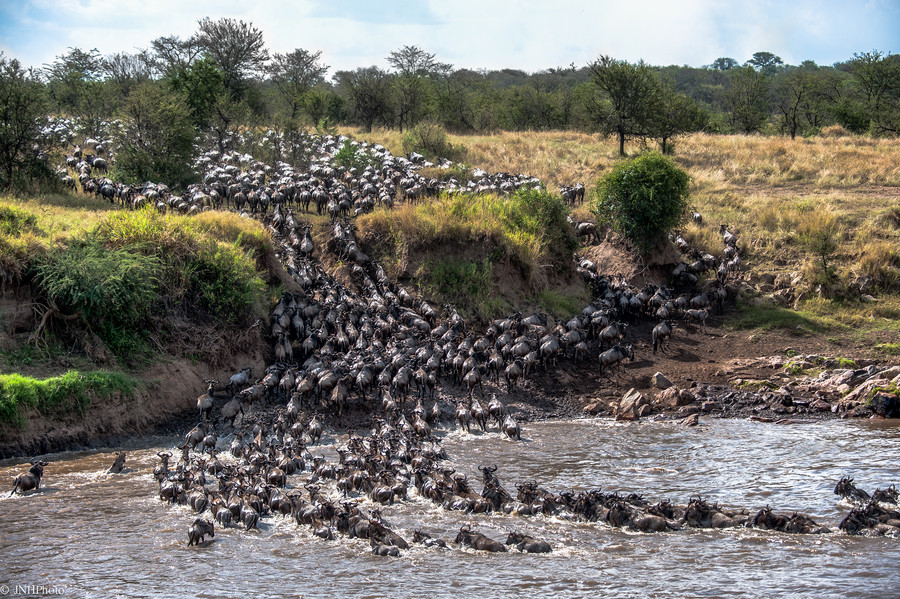 Photograph Crossing the Mara River; published by NatGeo by John Harrison on 500px