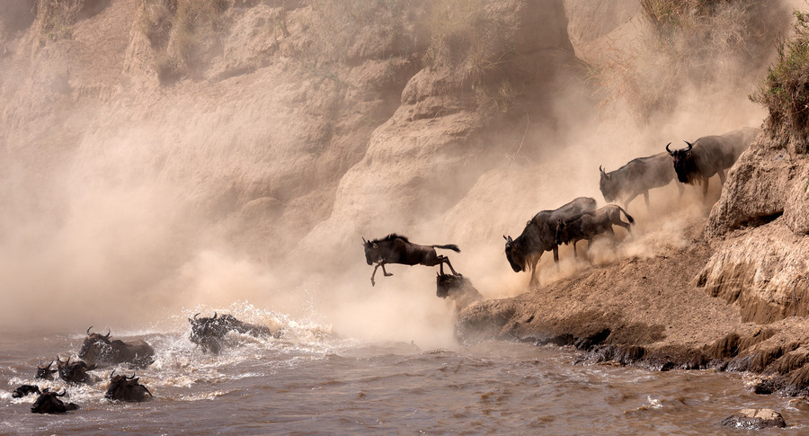 Photograph A large migration of Wildebeest by Sergey Agapov on 500px