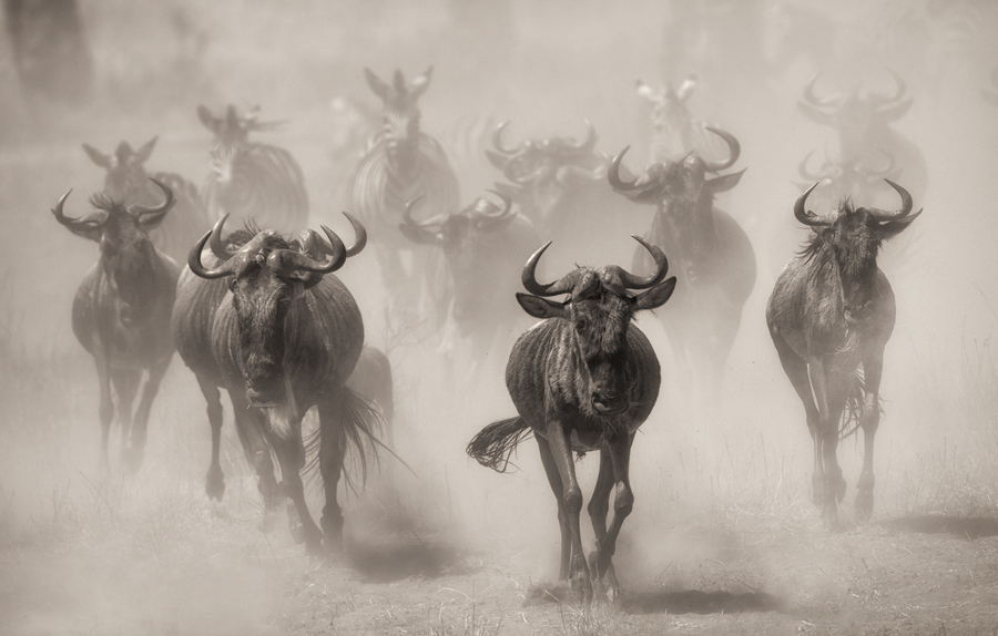 Photograph Rush hour by Giulio Zanni on 500px