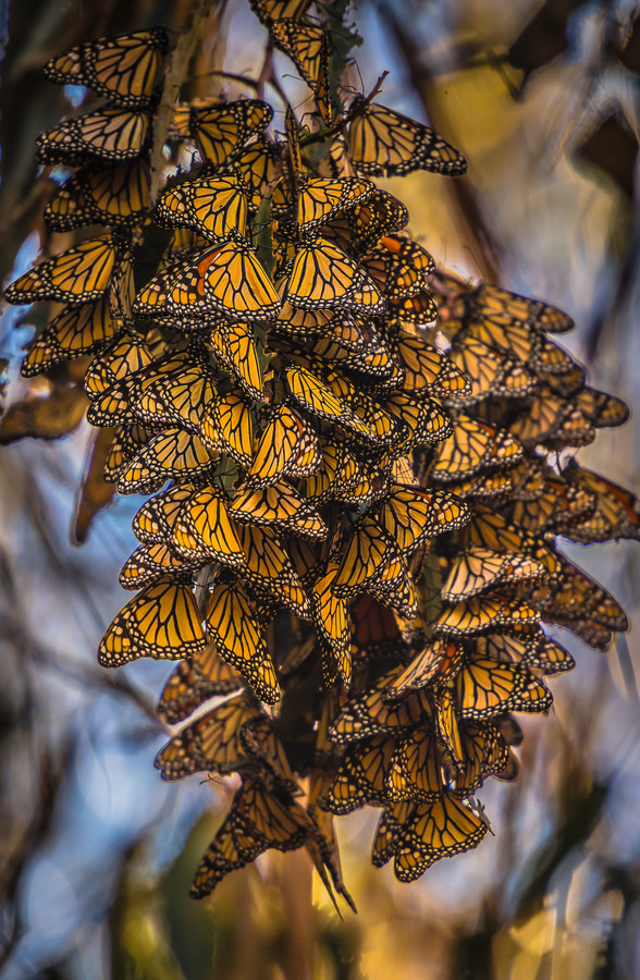 Photograph migration by Susan Bell  on 500px