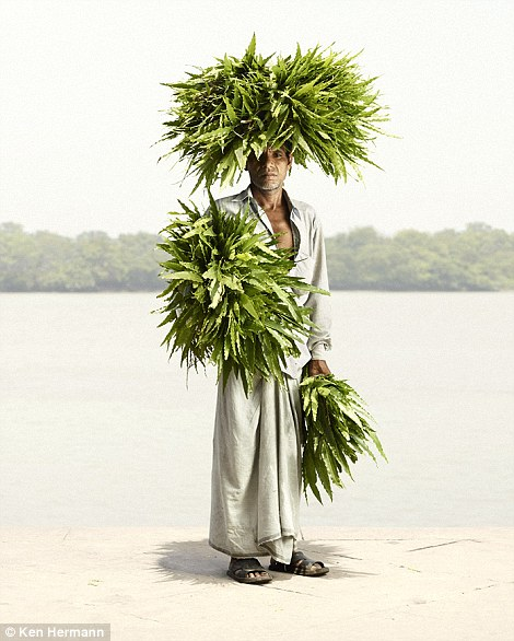 Palm crown: A man selling palm leaves in Calcutta