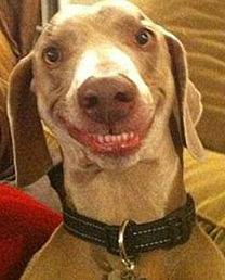 12-happiest-dogs-will-surely-make-your-day