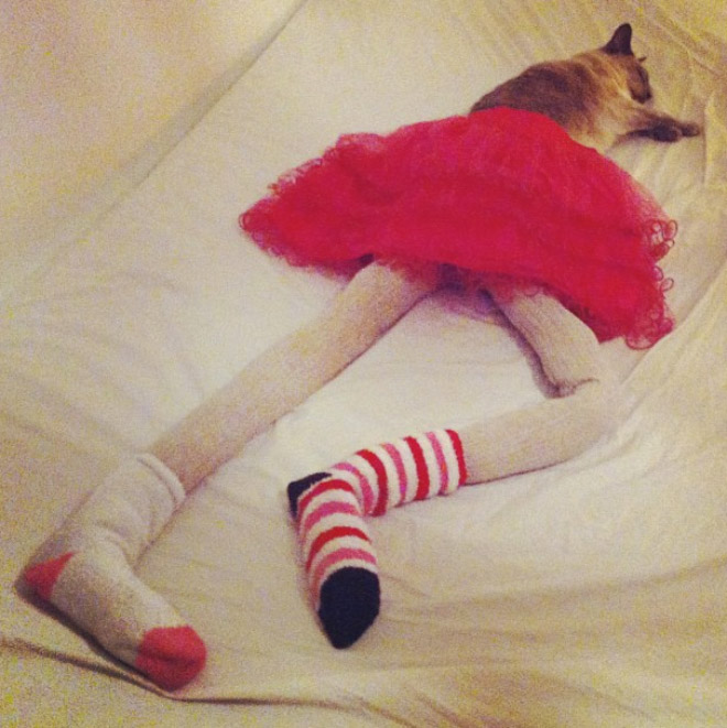 cats-wearing-tights