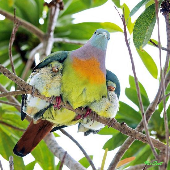 parenting moment  animals love their babies  colorful birds