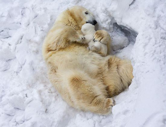 parenting moment  animals love their babies  bear