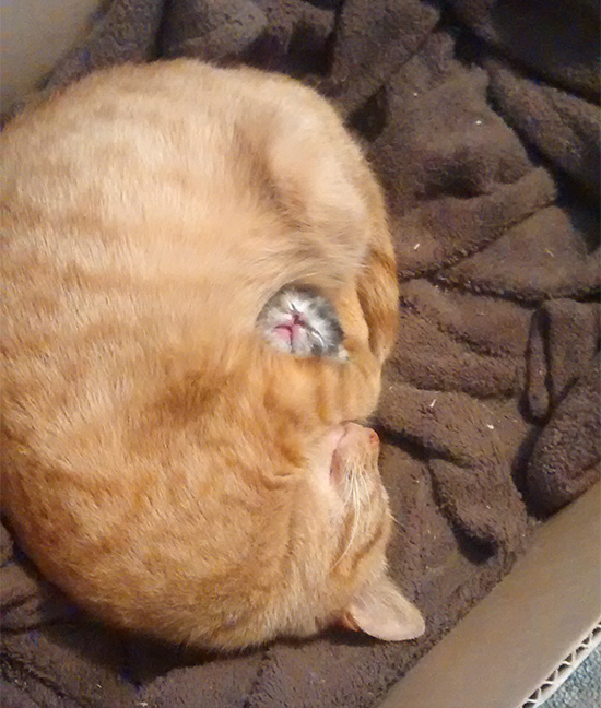 parenting moment  animals love their babies  cat