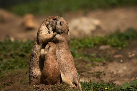 parenting moment  animals love their babies  squirell