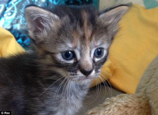 This purrrmanently sad kitten is so soft compare to Grumpy cat!