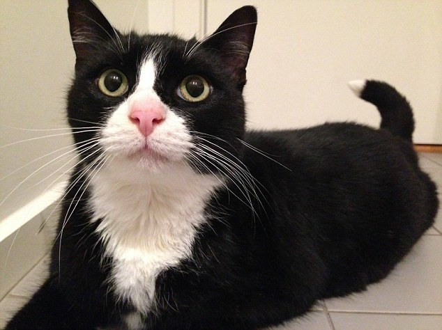 after five years Barney the cat, which was once thought drowned has now returned to his owner