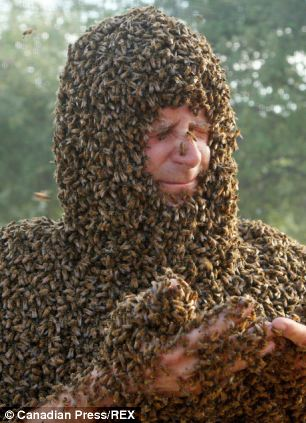 Trypophobia alert! This crazy Best Bee Beard competition is going on in Ontario