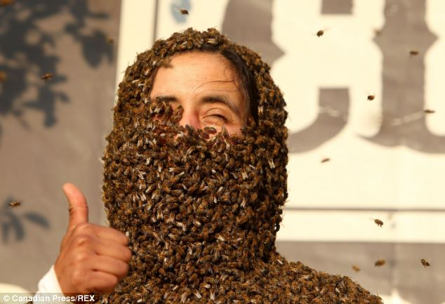 Trypophobia Alert This Crazy Best Bee Beard Competition