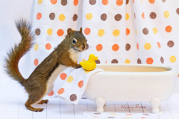cute-squirrels-do-adorable-chores