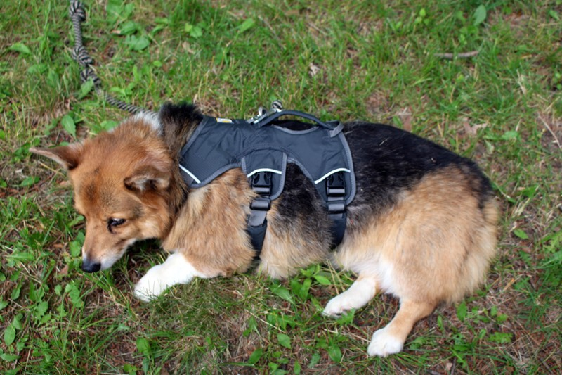 This guy's Corgi is becoming paralyzed, so they built him a wheel chair. This is so adorable and heartwarming.