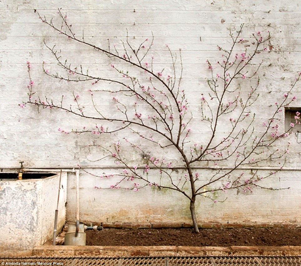 British photographer Amanda Harman was nominated for an award in the Still Live and Gardens category for this photograph of a tree covered in spring buds