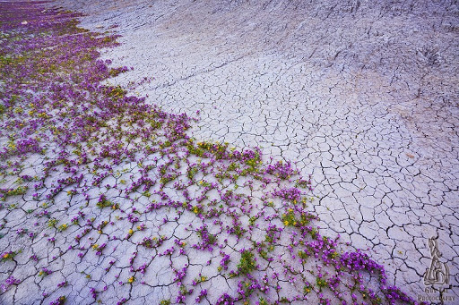 incredibly beautiful! These pictures of Desert wildflowers in the Colorado Plateau are breathtakingly stunning!