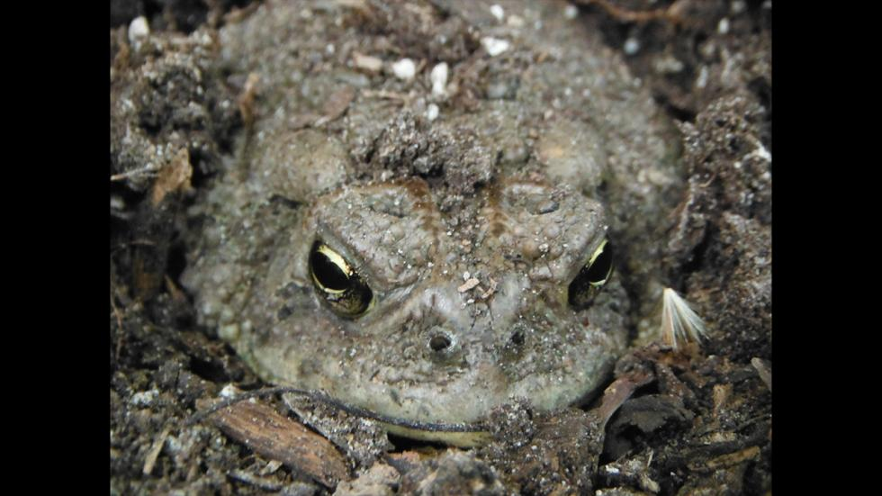 It's amazing out there awesome pictures Camouflaged Toad