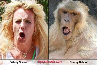 18. Britney Spears and Granny Baboon.