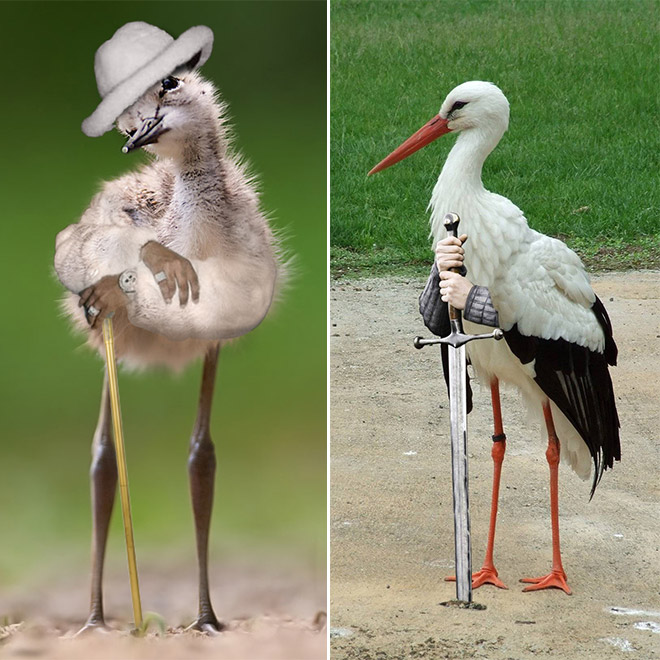 Bizarre and hilarious Birds With Arms