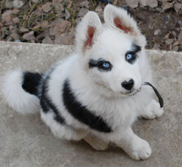 adorable animals with awesome and unusual fur markings