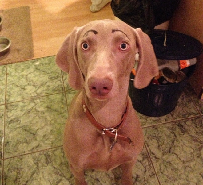 what-if-dogs-got-eyebrows