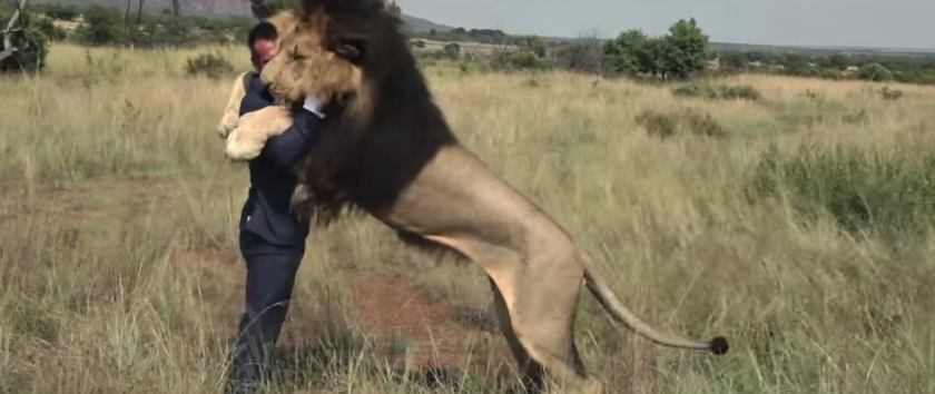 man-playing-with-lions