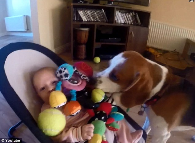 dog-brings-toys-to-stop-a-crying-baby