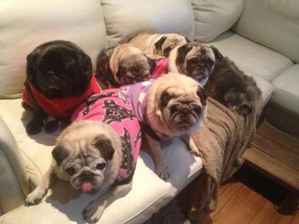 2.) A group of pugs? It's called a grumble.