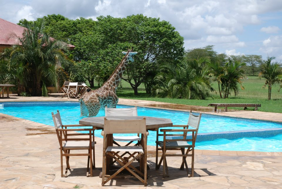 poor giraffe can't even fit in the pool with her long legs and neck!
