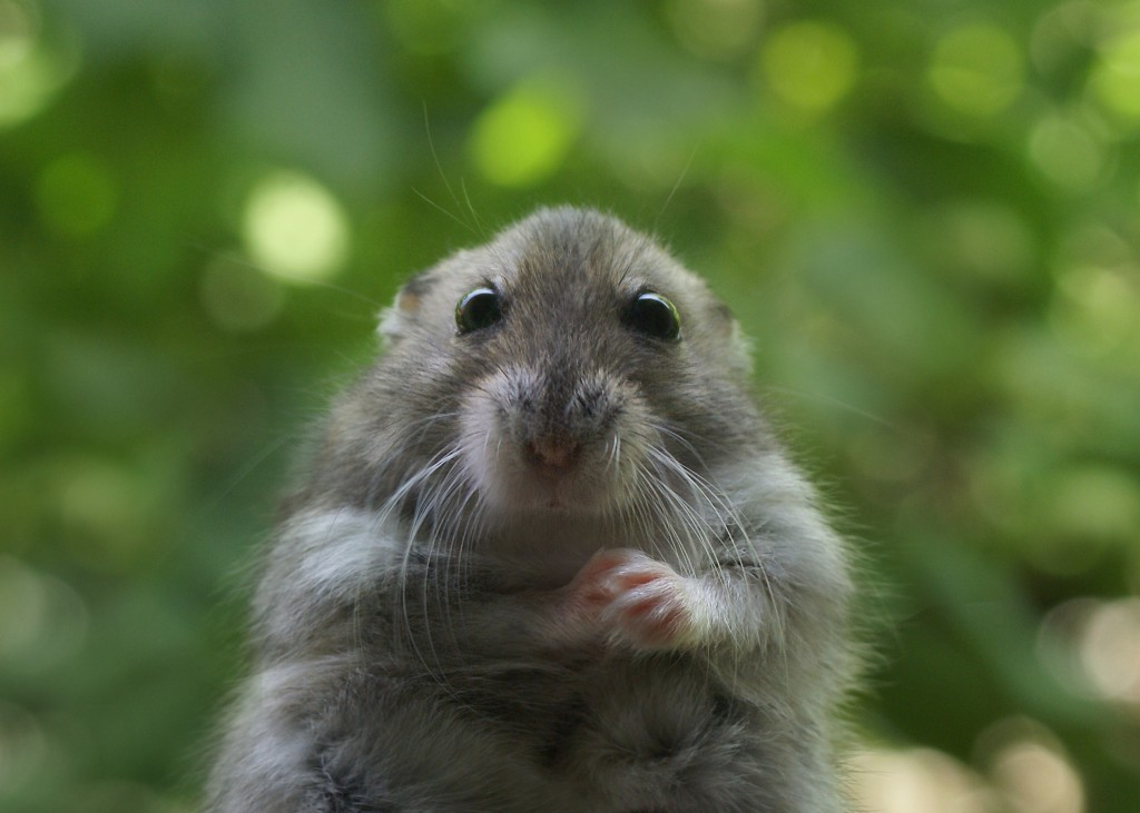 adorable animals that have grey fur