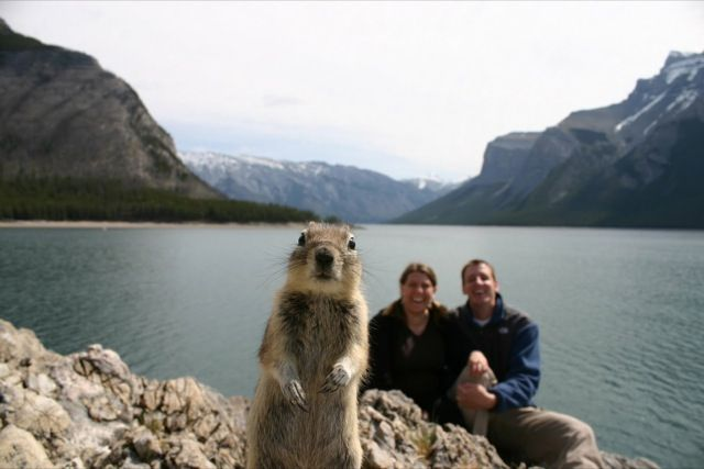 Photobombs timing timing hilarious